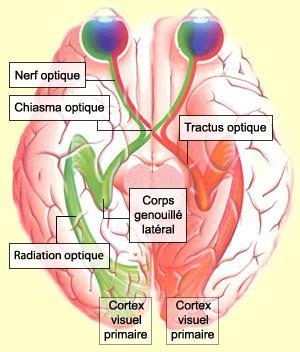 formation dans la cuisine le cerveau à tous les niveaux