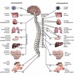 voeding hersenen