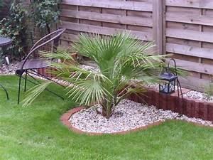 Welche Erde Für Palmen : chamaerops humilis winterhart pflanzen f r nassen boden ~ Watch28wear.com Haus und Dekorationen