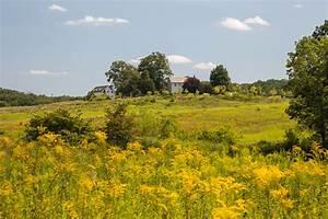 Meadow, Garden