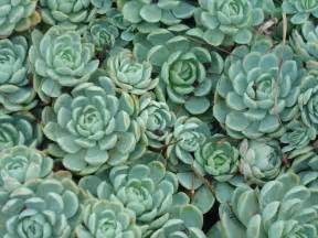 succulents 1 by serraangel on deviantart