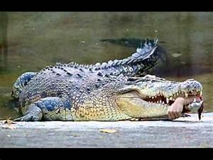 Alligator bites off teen's forearm in attack during swim ...