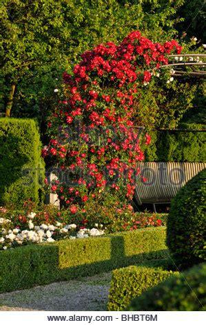 Rose Garden, Britzer Garten, Berlin, Germany Stock Photo
