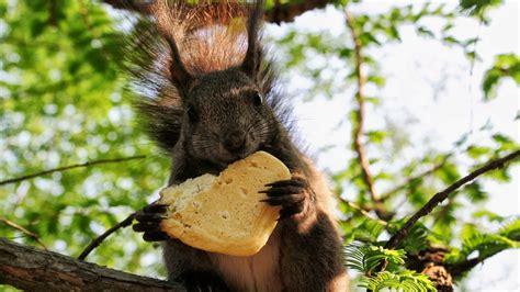full hd wallpaper squirrel cookie heart cute desktop