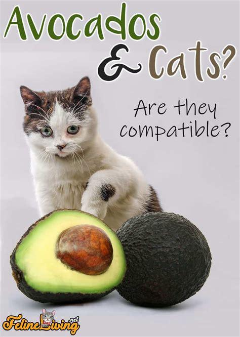 Avocado cats