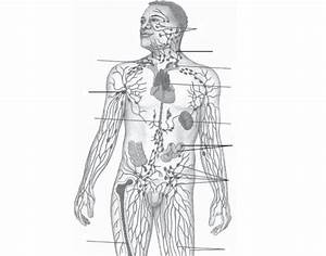 This Is A Quiz Called Uccs Lymphatic System Labeling And