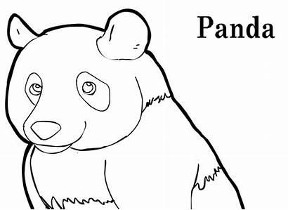 Coloring Panda Bear Pages Winter Cartoon Scarf