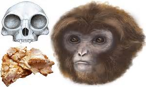 Scientists discover a new human ancestor | Daily Mail Online