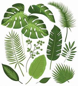 Tropical Leaves Vectors, Photos and PSD files | Free Download