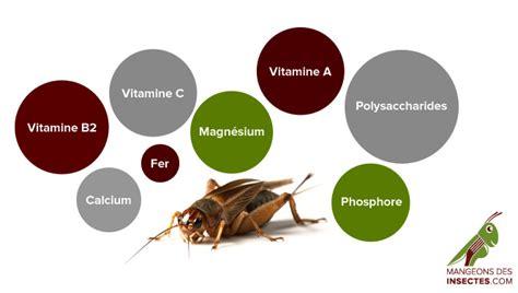 insecte cuisine défi cuisine insectes