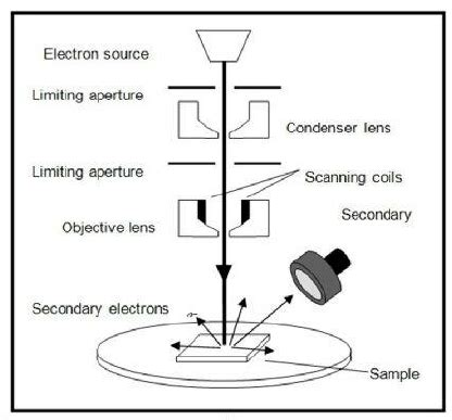 schematic diagram  scanning electron microscope sem