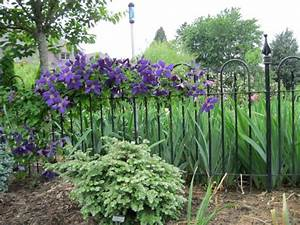 Clematis, Irises and Fence on Pinterest