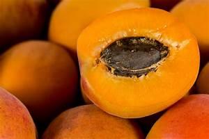 Aprikosenbaum Selber Ziehen : eine aprikose aus dem kern ziehen so gelingt 39 s ~ Lizthompson.info Haus und Dekorationen