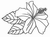 Lei Hawaiian Drawing Pages Coloring Paintingvalley sketch template