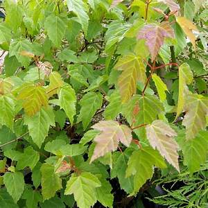 Sichtschutz Pflanzen Pflegeleicht : 5 schnellwachsende str ucher sichtschutz pflanzen ~ A.2002-acura-tl-radio.info Haus und Dekorationen