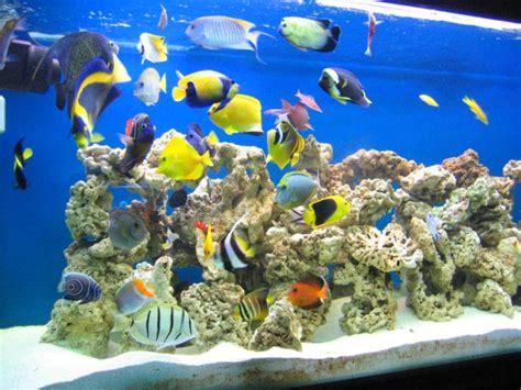truc et astuce aquarium eau de mer