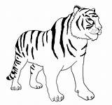 Tiger Coloring Bengal Clipart Stripes Without Diagram sketch template