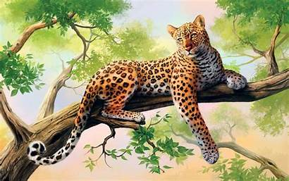 Leopard Wallpapers 2560 1440
