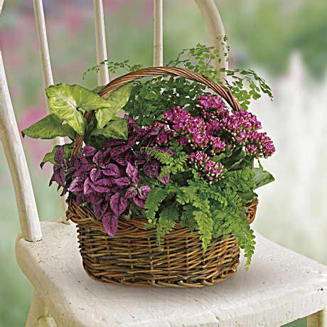 teleflora garden basket secret flowers t96 2a bouquet
