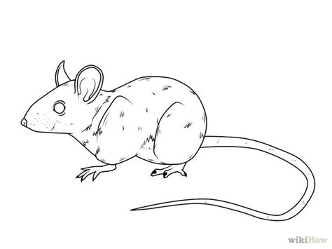 3 Ways To Draw A Mouse