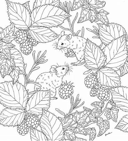 Coloring Flowers Drawings Nature Harmony Inspiration Birds