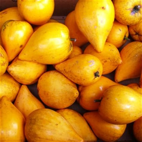 fruits with pits canistel