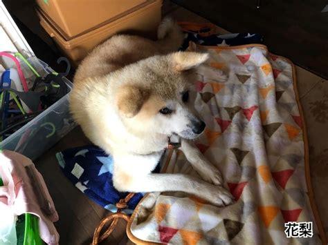 犬 里親 札幌