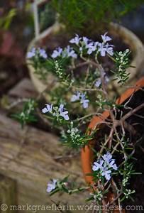 Garten Im Oktober : aus meinem garten 31 oktober 2013 lebensart im ~ Lizthompson.info Haus und Dekorationen