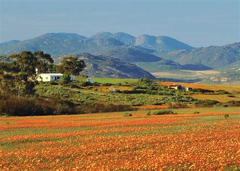 South Africa by Visit Namaqualand On A Trip To South Africa Audley Travel