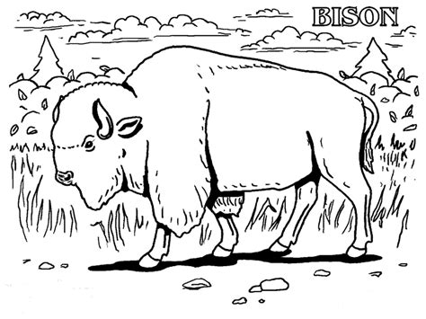 Bison Free Coloring Pages