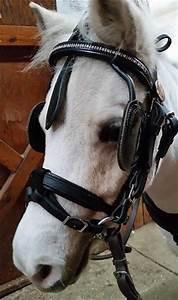 Horse Bit Chart Bit Lifter Mini Or Pony Chimacum Tack