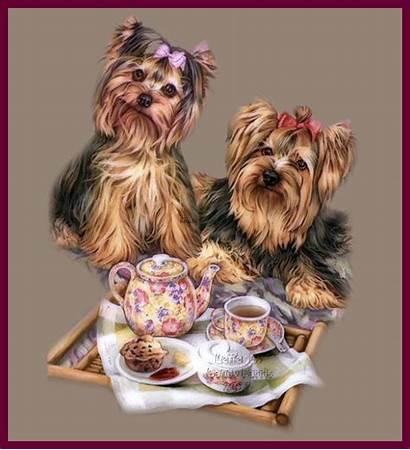 Morning Yorkie Yorkshire Terrier Lovethispic Biewer Packages