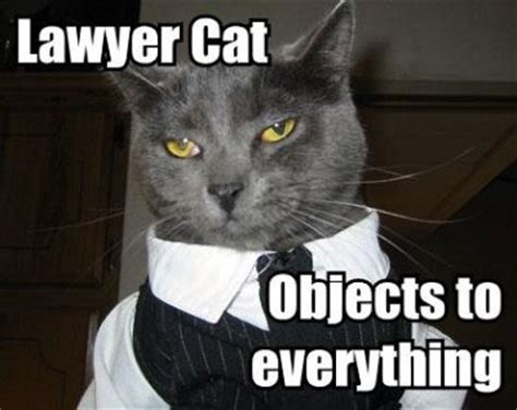 Lawyer Cat Meme - lawyer cat meme in threat to lawyer dog supremacy legal cheek