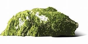 Moos Im Rasen Beseitigen : was tun gegen moos tipps tricks ~ Lizthompson.info Haus und Dekorationen