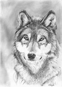 Wolf Pack Drawing In Pencil | www.imgkid.com - The Image ...
