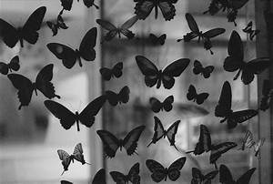 black and white, butterfly, photography - image #426172 on ...
