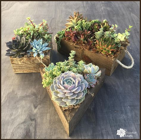 order succulent gifts  succulent eclectic