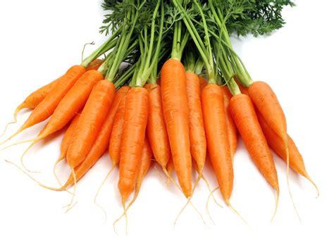 cuisiner des maquereaux salade de carottes aux herbes recettes