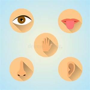 Senses icons stock vector. Illustration of senses, lips ...
