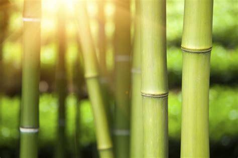 Bambus Garten Pflanzen Kölle by Bambus Pflanzen Im M 228 Rz Aktiv Werden Gartenpflanzen