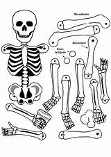 Pirate Coloring Skeleton Pages Printable Skull Getcolorings Colouring sketch template