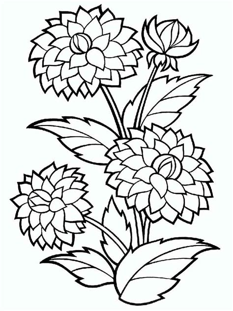 dahlia flower coloring pages   print dahlia