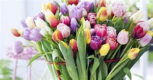 Tulpen In Vase : tulpen f r die vase richtig anschneiden mein sch ner garten ~ Orissabook.com Haus und Dekorationen