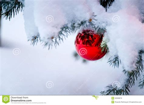 bright red ornament hanging   snow covered ch stock