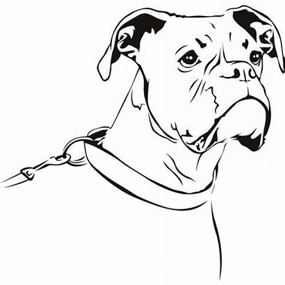 Boxer Dog Outline Line Drawing Wall Dogs