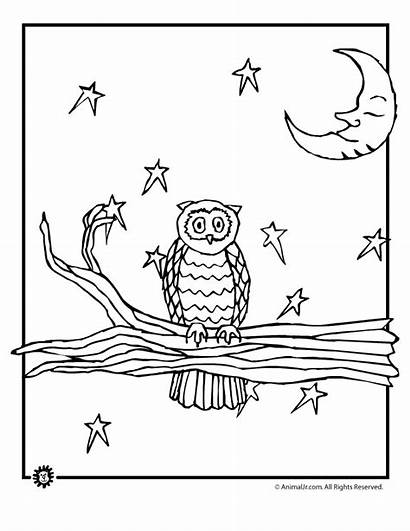 Coloring Night Pages Owl Animal Animaljr Colouring