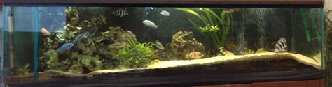 aquarium 1000 litres prix