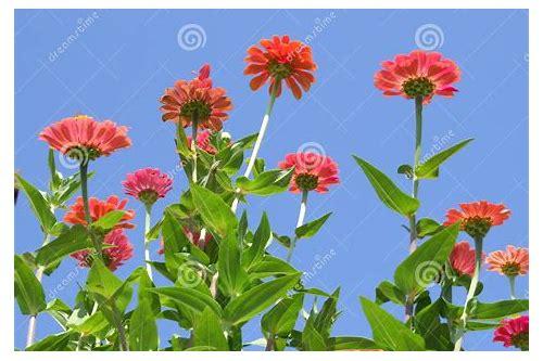 baixar de imagens de jardim de flores bonitas