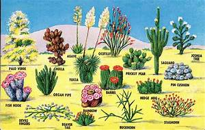 Cactus Names List | Gardening & Landscaping II: Cacti and ...