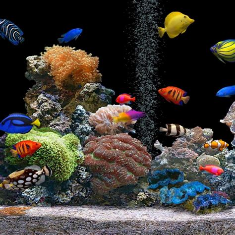 Animated Fish Tank Wallpaper Windows 7 - aquarium fish animated wallpaper top backgrounds